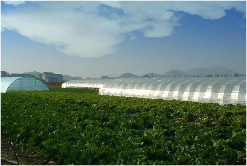 成熟农业用地500亩转让[项目编号:XM119]