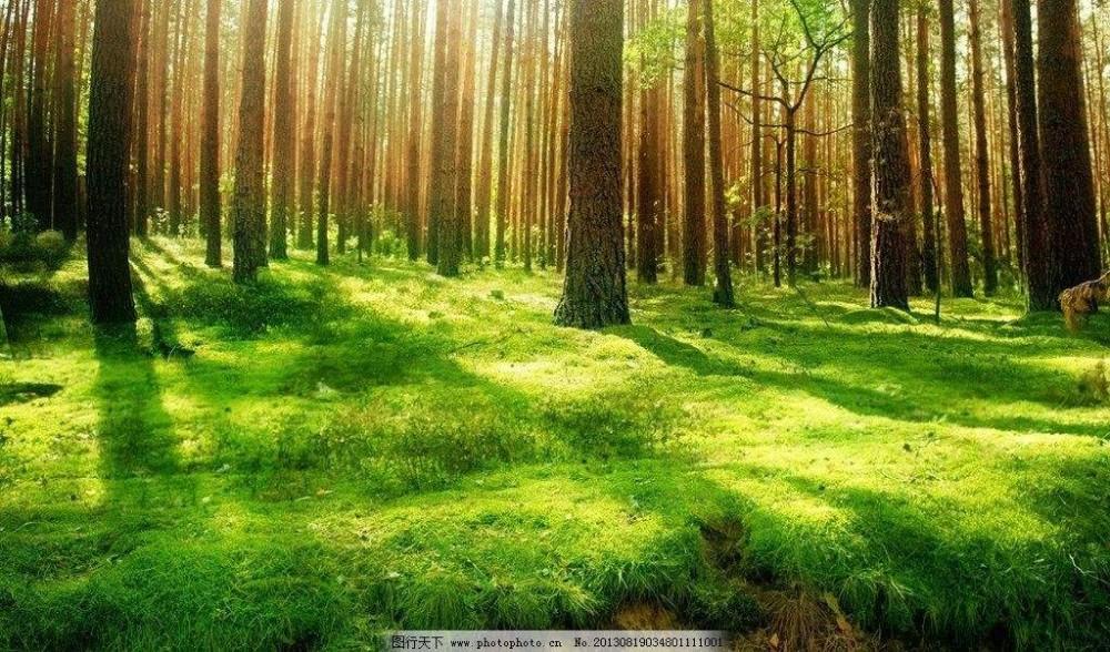 福建省龙岩市某上市公司27万林权100%转让价格10亿(包括土地)[项目编号:XM1728]