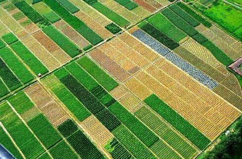 海南海口某镇2150亩农业用地出租50年(可做养老度假美丽乡村)[项目编号:XM1713]