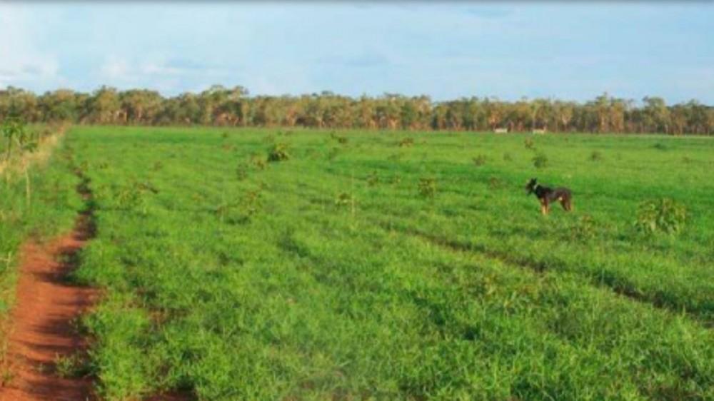 澳洲北疆Katherine附近牧场出售3800万澳元[项目编号:AUS173]