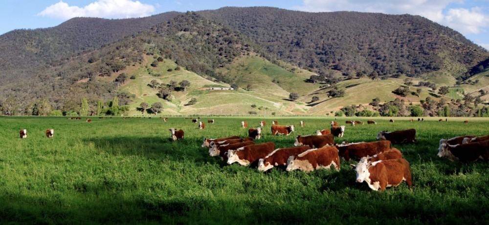 澳大利亚奶制品公司转让15%-20%股份240万至360万澳元[项目编号:AUS177]