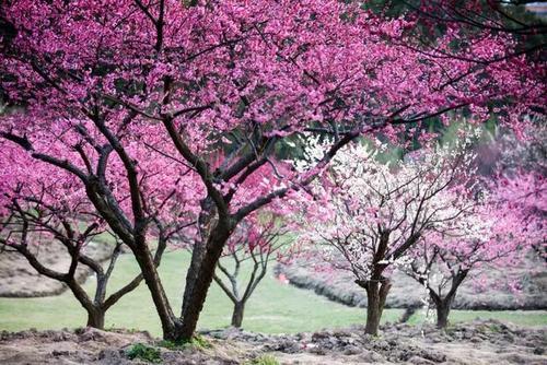 国内某著名芳香产业特色小镇项目整体转让