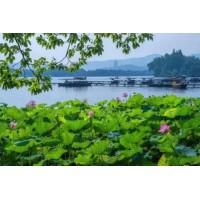 浙江省杭州市某区200亩住宅用地7.03亿整体转让