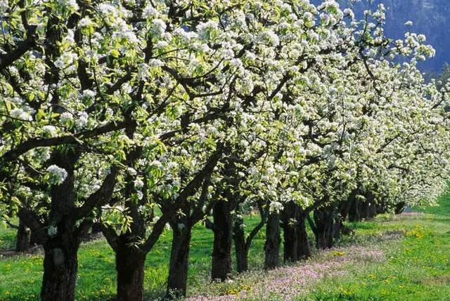 江苏省南京市浦口区560亩优质家庭农场项目(35万棵成年树木)3800万整体转让[项目编号:XM2432]